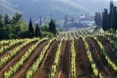 Kremlin's Wine is Made in Mount Athos