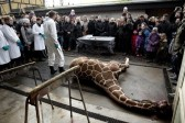 Protodeacon Kurayev believes giraffe's murder in Danish Zoo is natural for a society where homosexuals reign