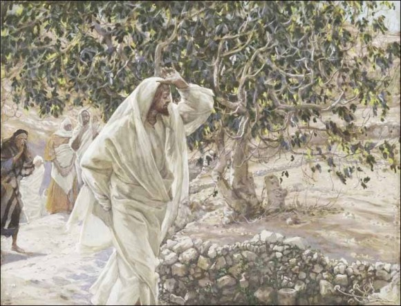 Joseph the All-Comely and the Cursed Fig Tree