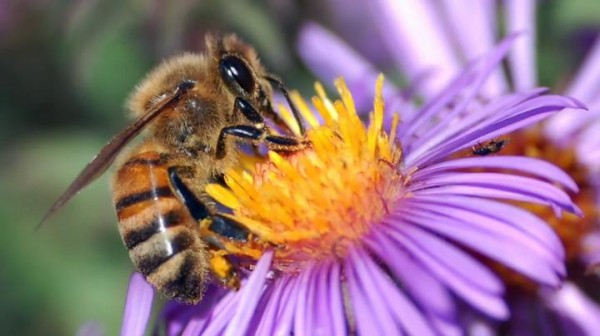 Be the Bee – We Can't Talk If We Won't Listen