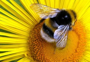 A Lesson On Bees: Saint John…