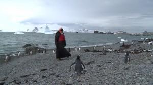 Patriarch Kirill strolls among penguins, prays…