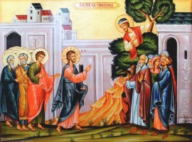 How to Respond like Zacchaeus When…