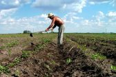 Romania's Government wants priests to convince farmers to join cooperatives