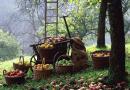 A New Year, a New Harvest: Renewal through Orthodox Christian Community