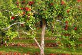 A Family Tree Full of Bad Apples