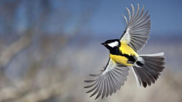Fasting for Freedom or Growing Wings for God