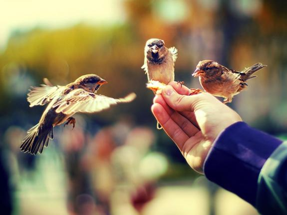 Each of Us Can Multiply Kindness on Earth