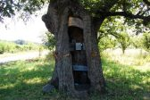 Serbian Village Residents Establish Chapel Inside Giant Oak