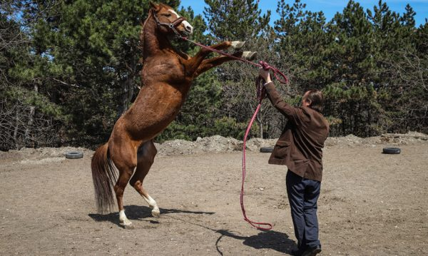 Priest Opens Hippotherapy Center in Yessentuki