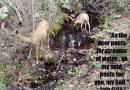 As a Deer Pants for Water
